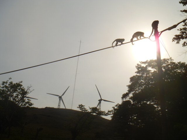 10 Monkeys on powerlines