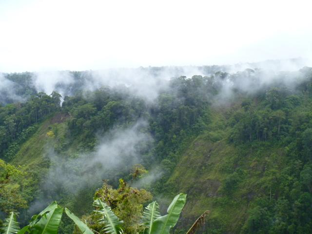 14 Misty hills