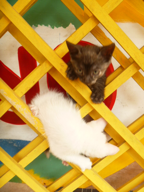 House kittens Krypto & Nita