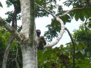 Sloth ~3toe
