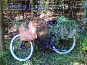 herb bicycle